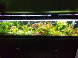 Akwarium 200/50/50