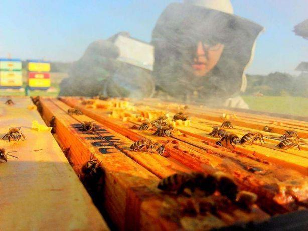 rodziny pszczele,odkłady,dadant,wielkopolskie,ule, Purda - image 1
