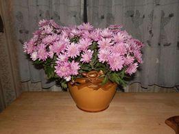 цветочный вазон-ЛКСФ,Львов,винтаж