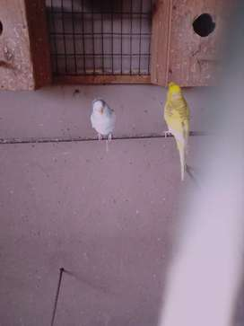 Birds _ budgies & more