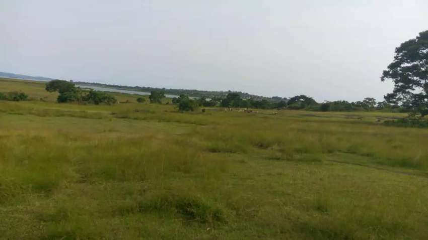 Land For sale on Lake Victoria 0
