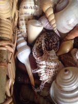 VIP подарок корзина ракушек маллюсков южных морей