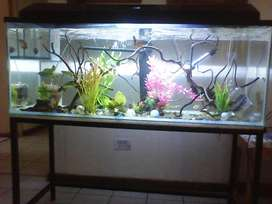 Fish tank with heater,pumps and food