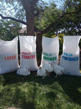 Chicken layer and broiler feed as well as pig feed