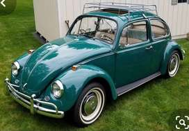 Wanted - Beetle project