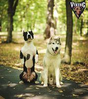 Дрессировка и воспитание собак.Ирпень Буча Ворзель Гостомель