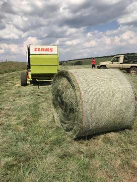 Eragrostis bales, well fertilized, 1.2m bales