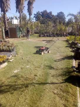 Electrical Lawnmower for Sale