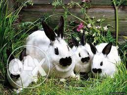 Комбикорм для кроликов с травяной мукой (откорм) 20кг
