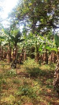 9 acres for sale in loresho 0