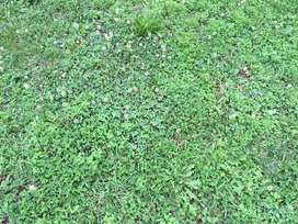 LAWN WEED AND INSECT CONTROL-CLAIM BACK YOUR LAWN