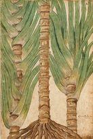 1553 r. ZIELNIK - KWIATY reprodukcje XVI w. grafik do wystroju