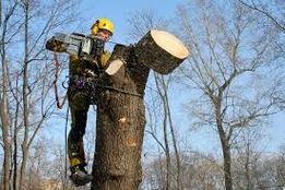 Порізка зрізка дерев валка удаление
