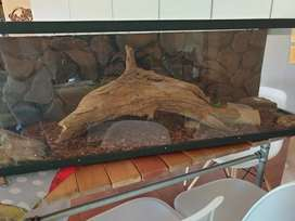 Cage for gecko
