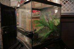 terrarium 30x30cm dla małych jaszczurek, pająków