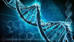 Решение задач по генетике