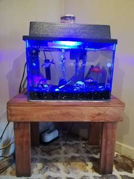 Tropical fish tank with fishes