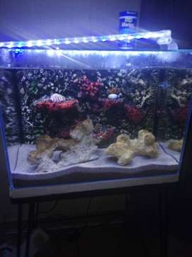 3 memo fish with tank forsale