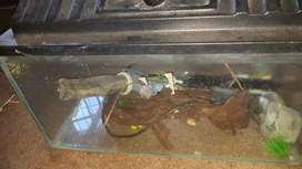 Fish tank complete with power head,pump,heater ,net and accessories