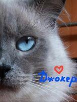 Невский маскарадный кот приглашает кошечку на свидание