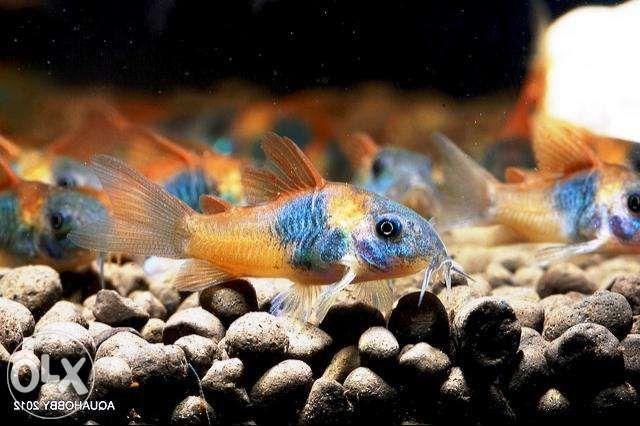 оптово розничный центр продажи аквариумных рыбок с Харькова Киев - изображение 8