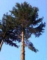 Profesjonalna wycinka drzew,rębak do gałęzi,frezowanie pni,kosz