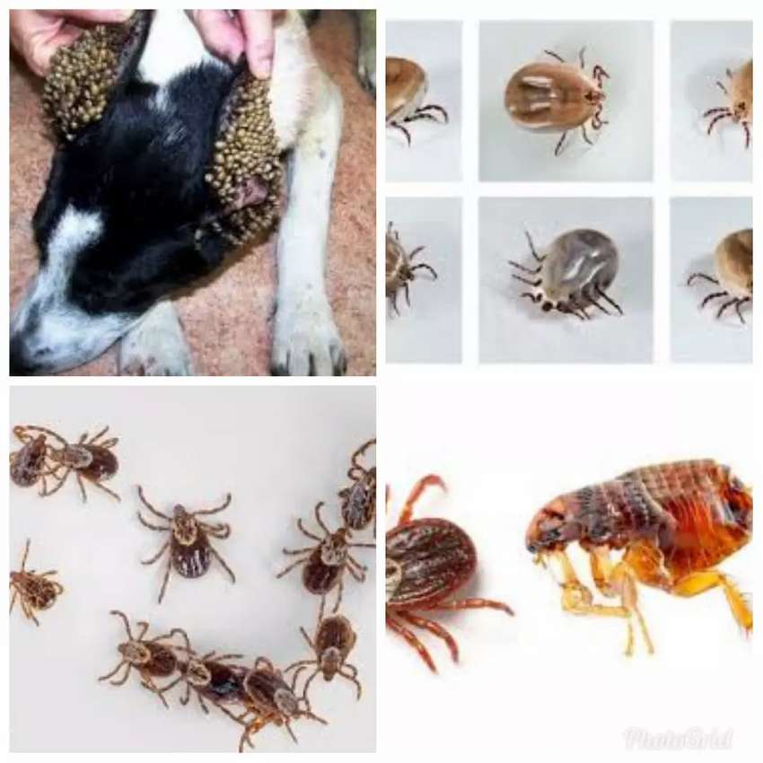 Fleas and Ticks Fumigation services ghc 150 0