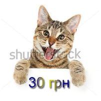 30 грн. , shutterstock , fotolia , depositphotos , 123RF