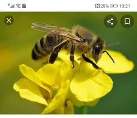 Removal of bees services