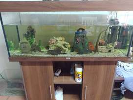Fish tanks plus fish