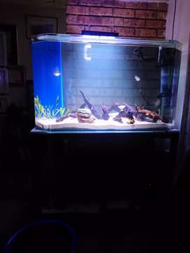 Fishtank with all equipment and fish