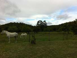 Country  living: 2 bedroom pet friendly cottage on horse farm