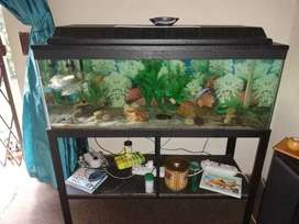 Fishtank with stand and extras