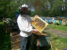 Продам пчелопакеты карпатской породы пчел на весну 2019 года