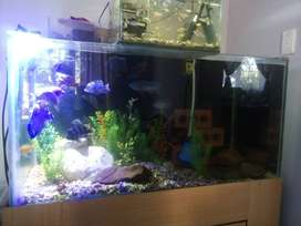 Fish Tank, Stand, Pumps & +- 100 Fish for Sale R4500