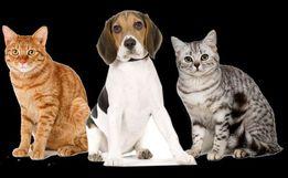 Передержка кошек, собак и др. животных
