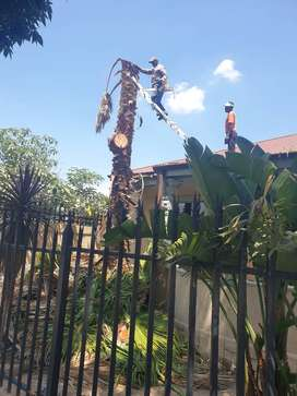 Tree Cutting and Refuse Disposal