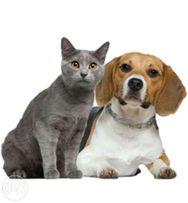 Профессиональная кастрация собак (от 450 грн) и котов (300 грн)