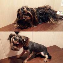 Стрижка (груминнг) собак 200 грн