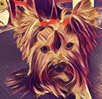 Kurs Groomingu Groomerski DOG&CAT Katowice psi fryzjer strzyżenie psów