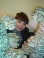 Грибы. Мицелий. Бесплатные консультации. Выращивание грибов.