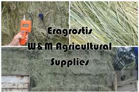 Fresh Eragrostis square and round bales available
