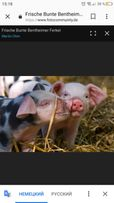 Кормовые добавки для свиней ,,Feed Mix,, ,,BestMix,,
