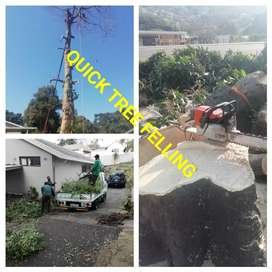 Quick Tree Felling