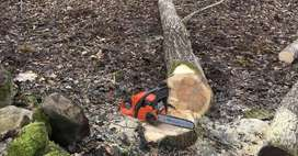 Tree Felling, rubble & timber removal