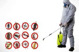 MOST EFFECTIVE AND CHEAPEST PEST CONTROL SERVICES