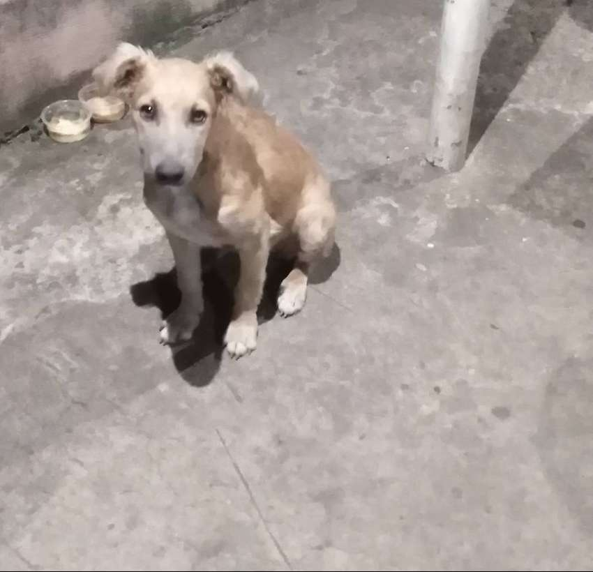 4 month old pup giveawy