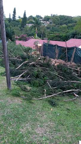 Nk garden services and Tree felling.