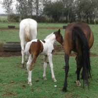 Image of Mare and foal