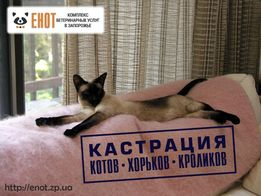 Кастрация котов, фреток (хорьков), кроликов в Запорожье